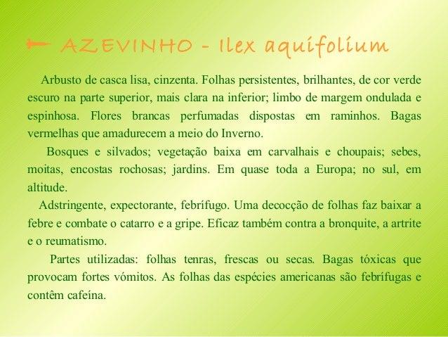  Catária – Nepeta cataria ( Nêveda - dos – gatos, erva – gateira)  Planta vivaz acizentada, perfumada. Caules ramificados...