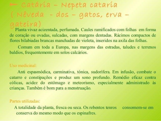  Erva – de – São – Roberto – Geranium robertianum Planta anual ou bienal de cheiro desagradável. Caules estendidos, finos...