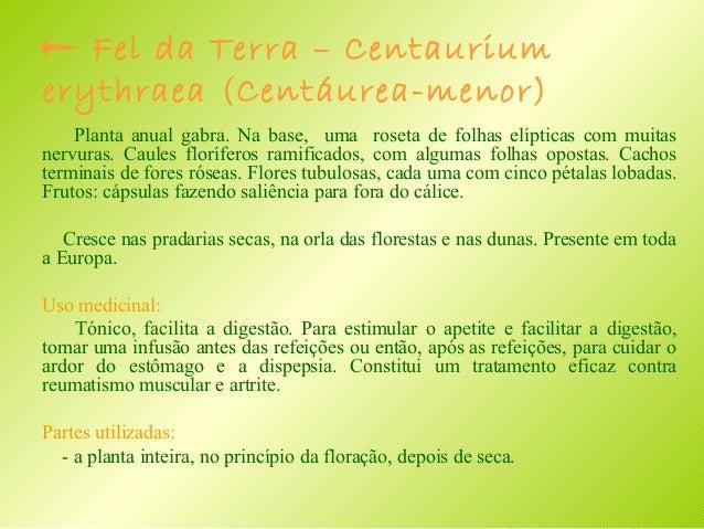  Hera – terrestre - Glechoma hederacea ( Erva – de São – João) Planta vivaz, com longos caules rastejantes inseridos no n...