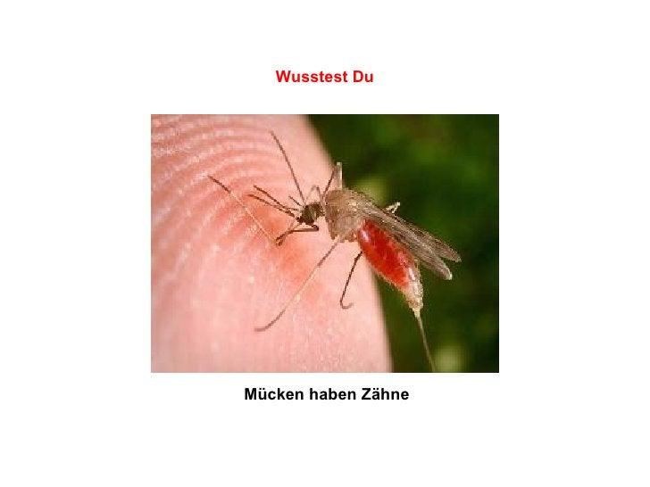 Mücken haben Zähne   Wusstest Du