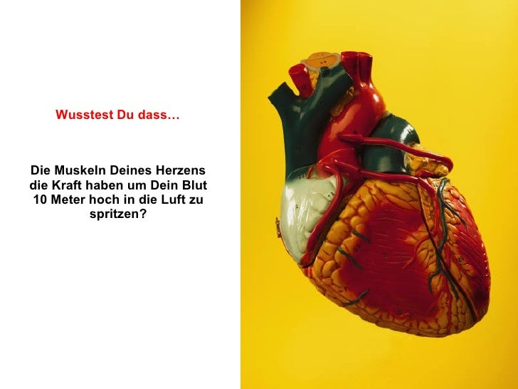 Die Muskeln Deines Herzens die Kraft haben um Dein Blut 10 Meter hoch in die Luft zu spritzen? Wusstest Du dass…