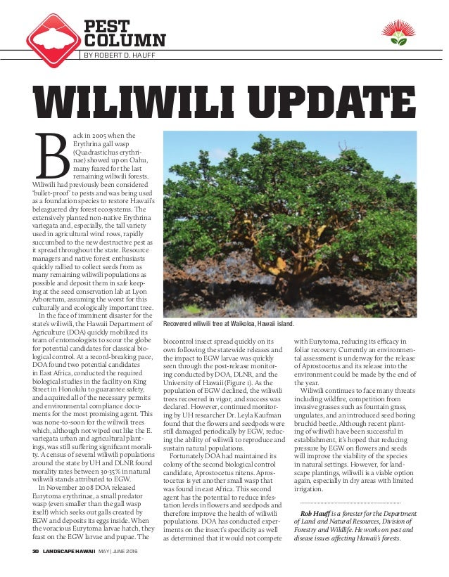 relationship between gall wasp and wiliwili tree