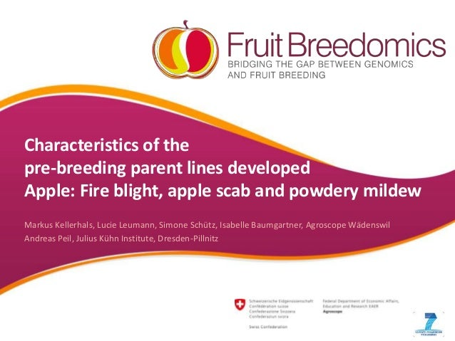 Characteristics of the pre-breeding parent lines developed Apple: Fire blight, apple scab and powdery mildew Markus Keller...