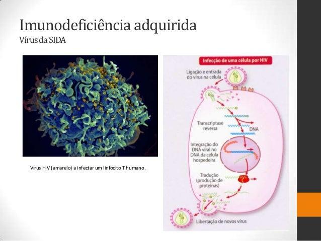 Imunodeficiência adquiridaVírus da SIDA  Vírus HIV (amarelo) a infectar um linfócito T humano.