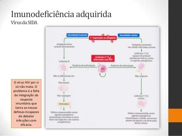 Imunodeficiência adquiridaVírus da SIDA O vírus HIV por si   só não mata. O problema é a falta  de integração da      resp...