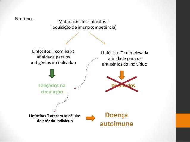 No Timo…                    Maturação dos linfócitos T                 (aquisição de imunocompetência)       Linfócitos T ...