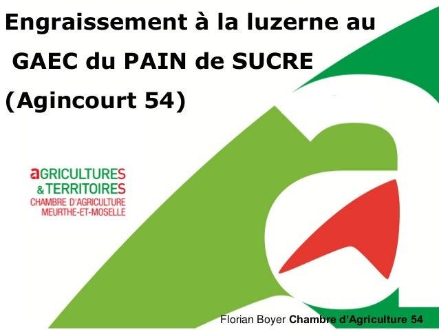Florian Boyer Chambre d'Agriculture 54 Engraissement à la luzerne au GAEC du PAIN de SUCRE (Agincourt 54)