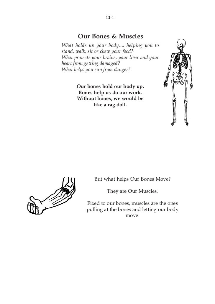 12-1       Our Bones & MusclesWhat holds up your body.... helping you tostand, walk, sit or chew your food?What protects y...
