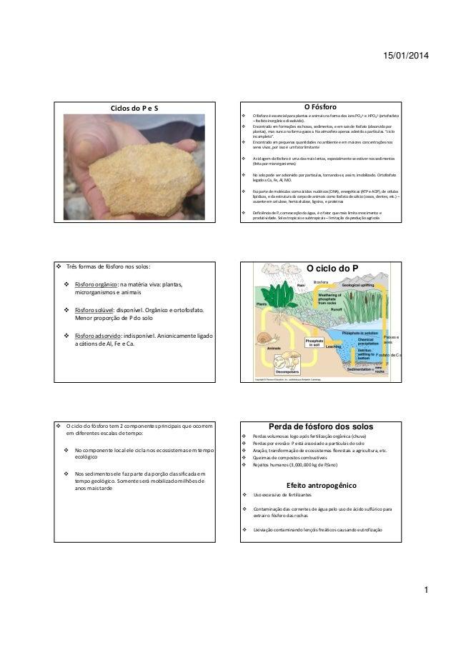 15/01/2014  Ciclos do P e S  O Fósforo O fósforo é essencial para plantas e animais na forma dos íons PO43- e HPO42- (orto...