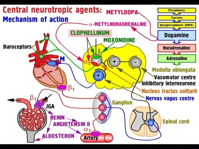 Antihypertensive And Lipid Lowering Drugs