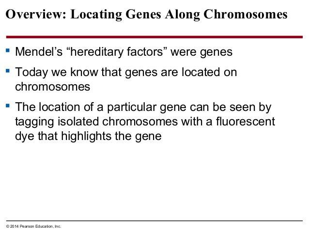 biology in focus chapter 12 rh slideshare net Paper Outline Paper Outline