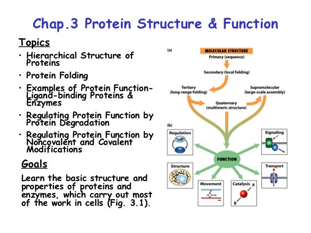 Chap.3 Protein Structure & FunctionTopics• Hierarchical Structure of  Proteins• Protein Folding• Examples of Protein Funct...
