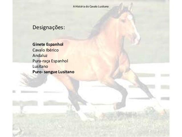 Cavalo Lusitano Slide 2