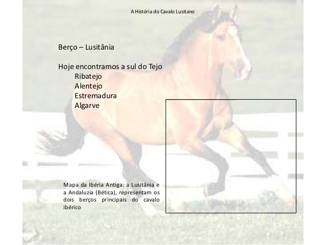 Cavalo Lusitano Slide 3