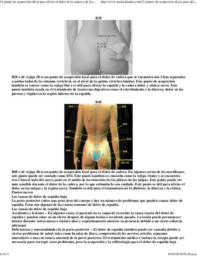 Excepcional La Cadera Y La Anatomía De Espalda Baja Componente ...
