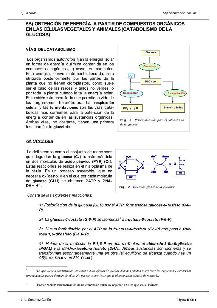 II) La célula                                                                                                5b) Respiraci...