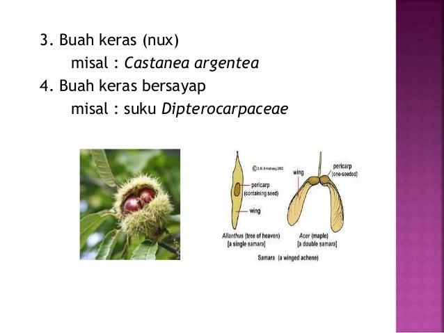 PPT Morfologi Tumbuhan - Bunga