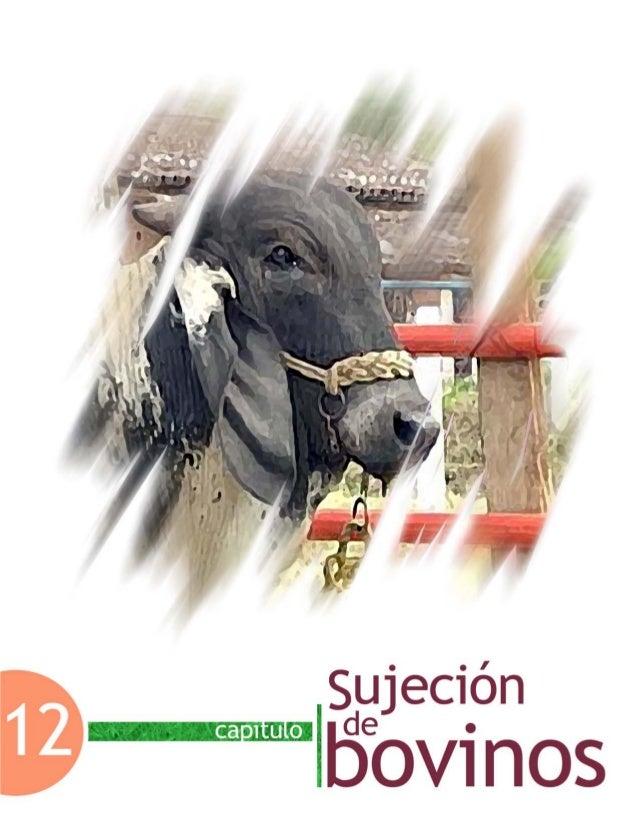 Capítulo 12. Sujeción de bovinos Facultad de Medicina Veterinaria y Zootecnia-UNAM 427 Capítulo 12. Sujeción de bovinos