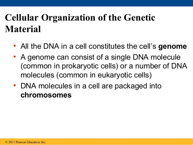 the genetic molecule common to all living things is