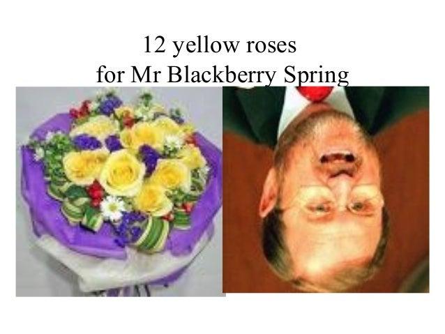 12 yellow roses for Mr Blackberry Spring