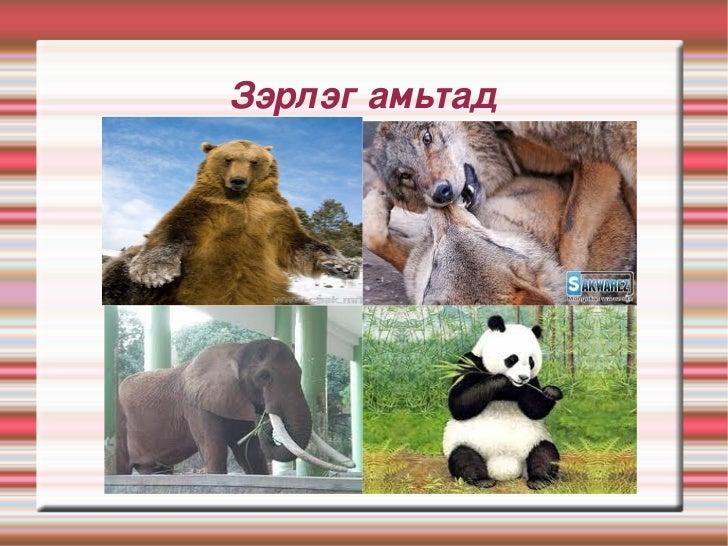 Зэрлэгамьтад