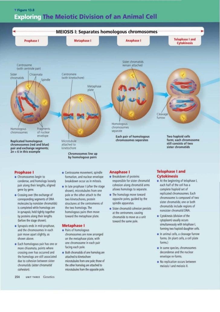 Biology Ch 13
