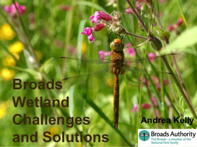 Aren't the Broads Brilliant ! Broads Wetland Challenges and Solutions Andrea Kelly