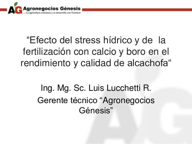 """""""Efecto del stress hídrico y de la fertilización con calcio y boro en el rendimiento y calidad de alcachofa"""" Ing. Mg. Sc. ..."""