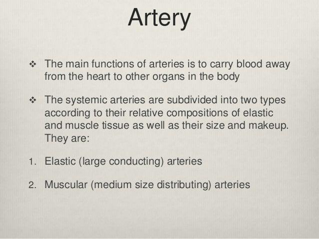 13 arteries and arterioles