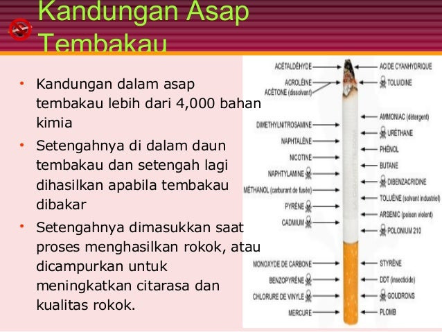Image result for kandungan rokok