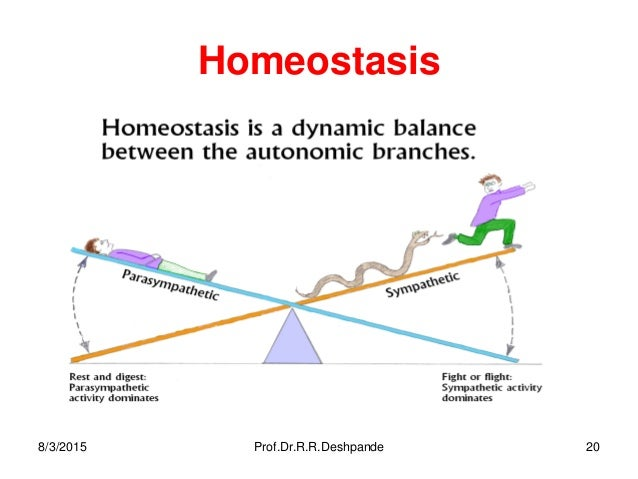 homeostasis cell physiology by prof dr r r deshpande rh slideshare net