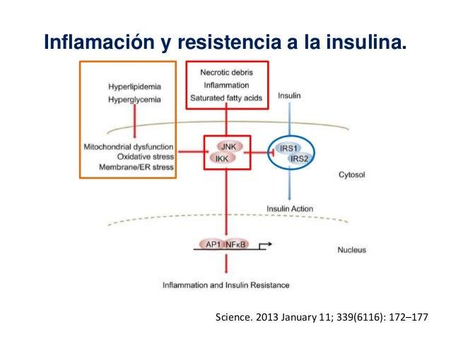 Mecanismos de resistencia a la insulina en obesidad