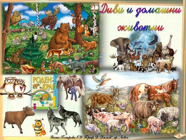 В гората, на полето, в реките и морето, във фермите, в зоопарковете и у дома живеят различни животни. Животинският свят е ...