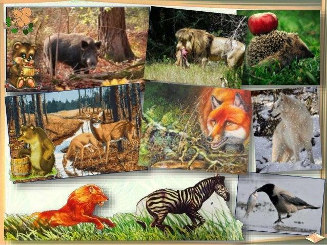  Домашните животни живеят в дворовете и фермите.