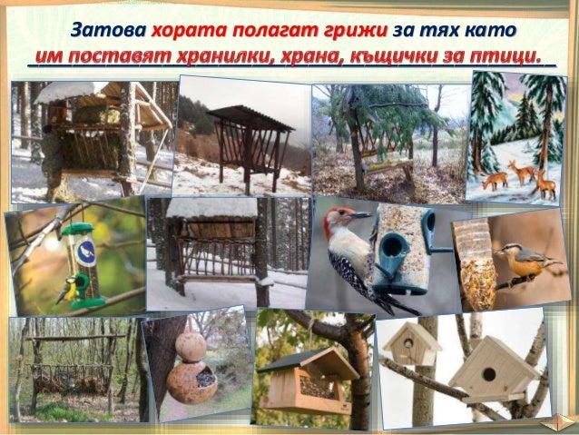  Когато животните са у дома им осигуряват храна и вода.  Водят ги на паша.