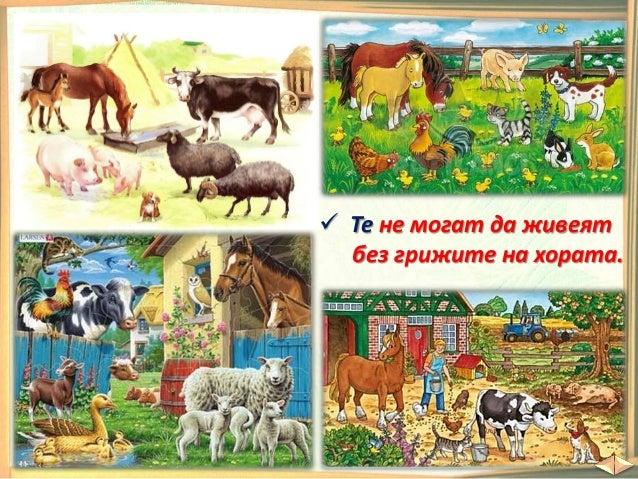 С цифрата 2 отбележете домашните животни. В празните кръгчета с цифрата 1 отбележете дивите животни. Какво животно е отбел...