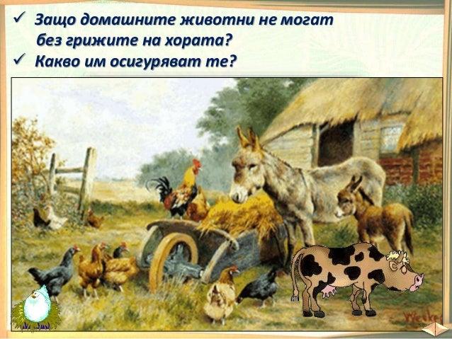Защо хората отглеждат домашни животни?
