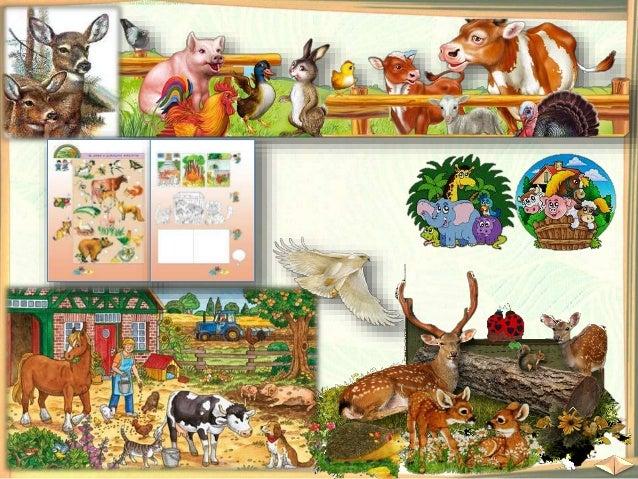 Наблюдавайте внимателно и отговорете на въпросите: Какво знаете за тези животни? Къде живеят те? Кой се грижи за тях?