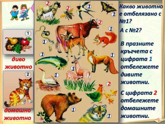 От групата на бозайниците хората отглеждат: овце кози крави зайци магарета коне свине биволици Защо? Отлеждат ги заради: ...