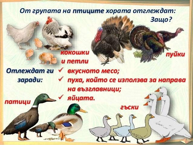 Кои животни са диви? Отбележи с . 1 2 3 4 5 6