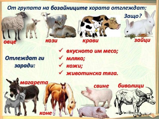 Кое е излишното животно? Кликни върху него. ЗА ТЕЗИ, КОИТО ИСКАТ ДА ЗНАЯТ ПОВЕЧЕ: От кои животни получаваме млечни продукт...