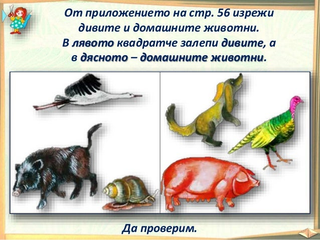 13. Диви и домашни животни - РК, Просвета - В. П.