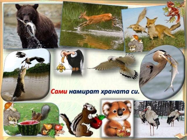 Наблюдавайте внимателно и отговорете на въпросите: Какво знаете за тези животни? Къде живеят те? Кой се грижи за тях? Кой ...