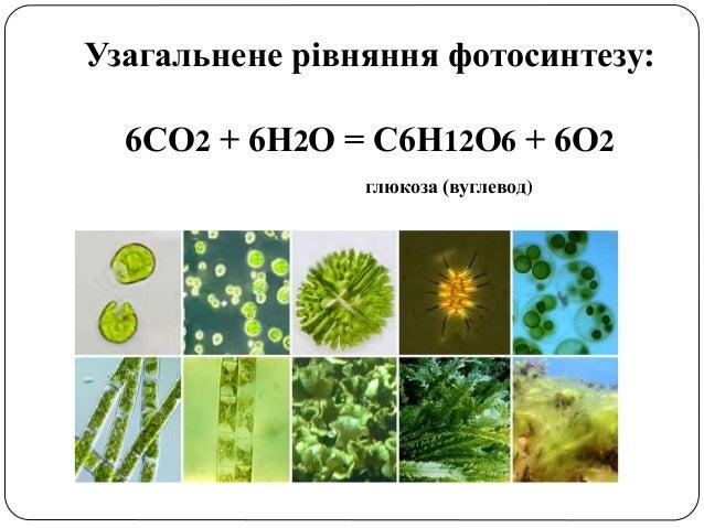 пит 13,фотосинтез Slide 2