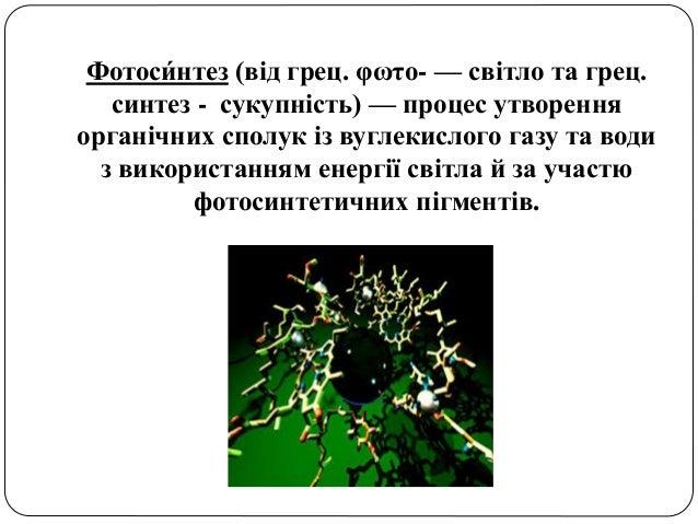 пит 13,фотосинтез Slide 3