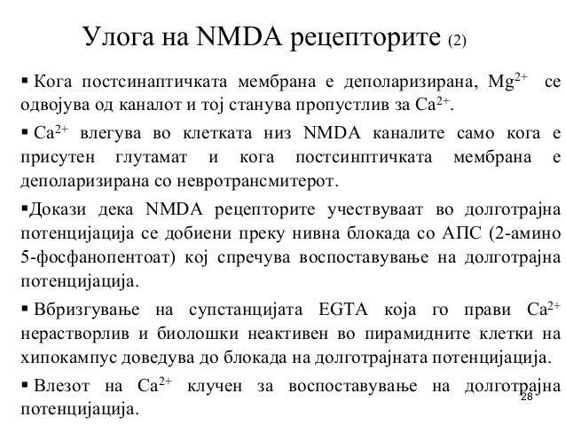 28 Улога на NMDA рецепторите (2) Кога постсинаптичката мембрана е деполаризирана, Mg2+ се одвојува од каналот и тој станув...