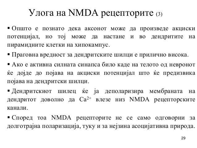 29 Улога на NMDA рецепторите (3) Општо е познато дека аксонот може да произведе акциски потенцијал, но тој може да настане...