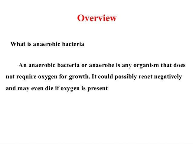 13 anaerobic bacteria