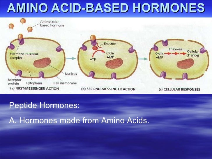 what are steroid hormones made from