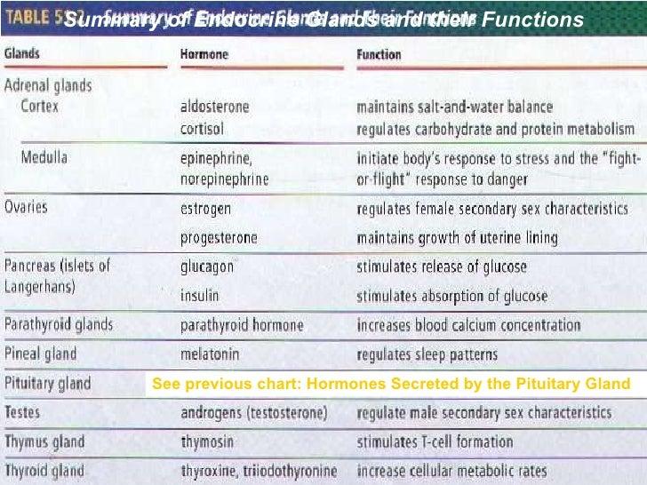 13 Endocrine Systemppt